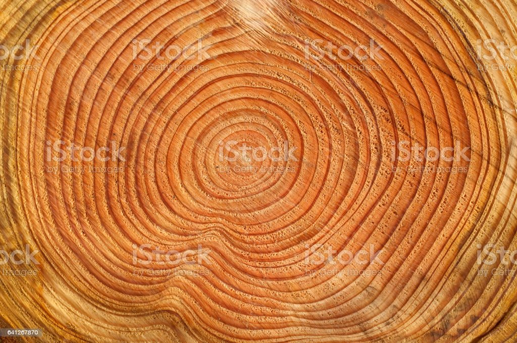 Annual rings, Fichte; Picea; abies; Spruce stock photo
