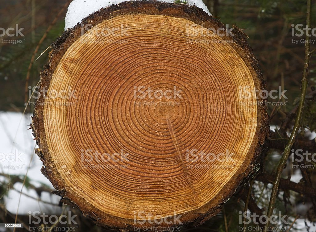 Annual rings in a tree stump stock photo