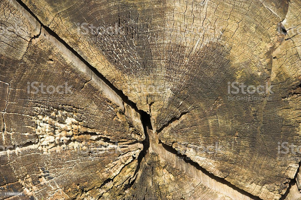 Annual Rings stock photo