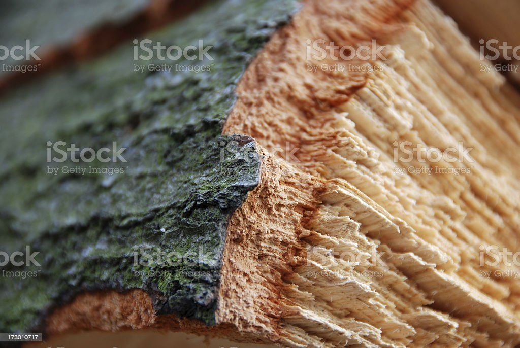 Annual rings royalty-free stock photo