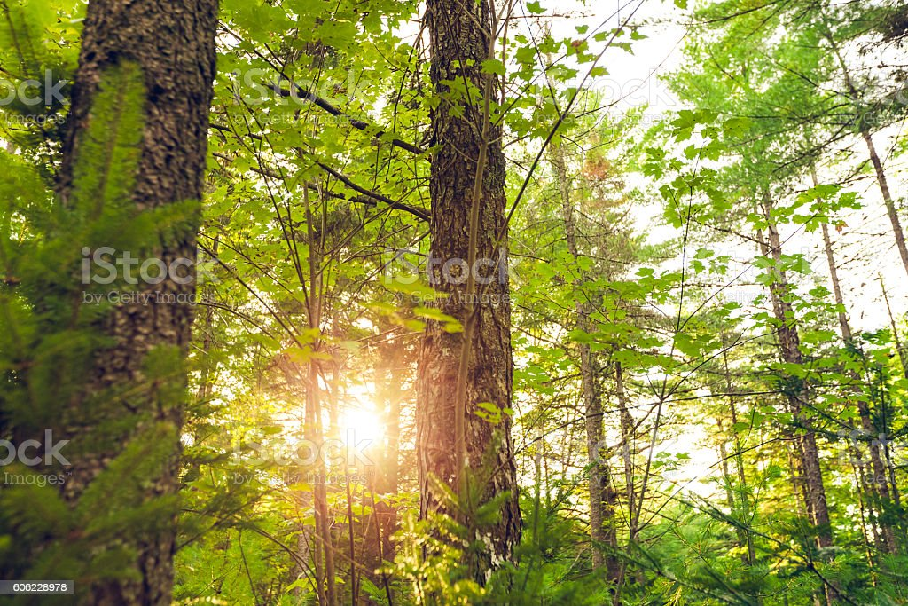 Another beautiful morning in woods of Maine stock photo