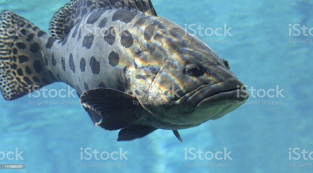 Another big fish stock photo