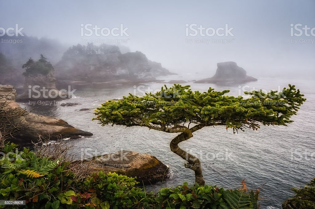 Another Bonsai stock photo