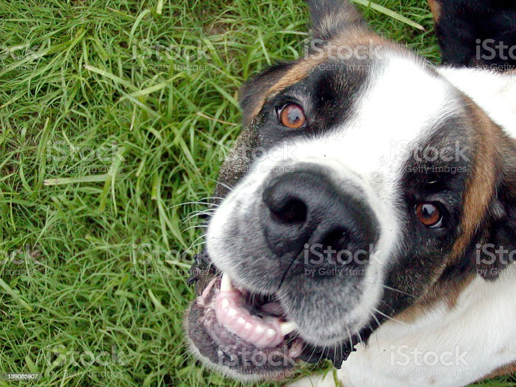 another @#$! dog photo royalty-free stock photo