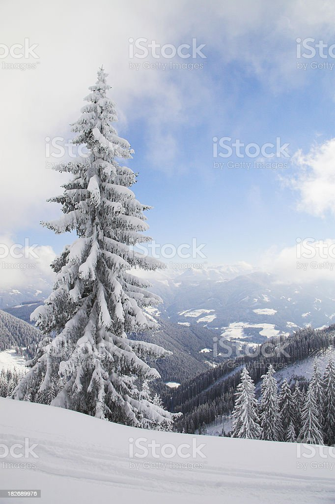 Another Lonely tree stock photo