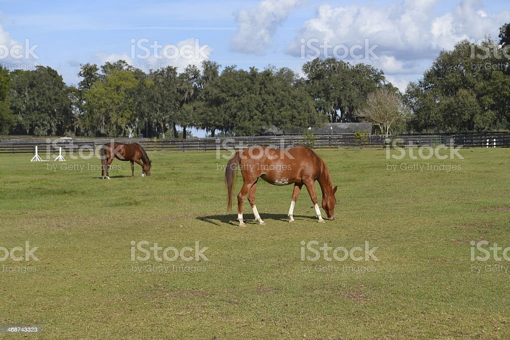 Another Perfect Day stock photo