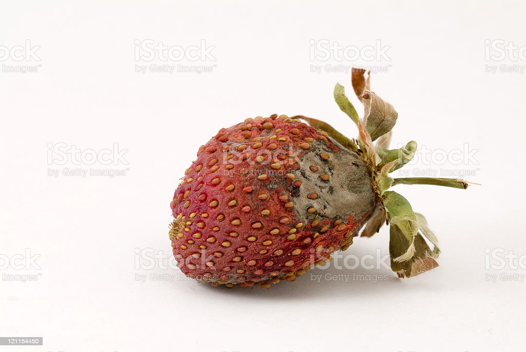 Another rotten strawberry royalty-free stock photo