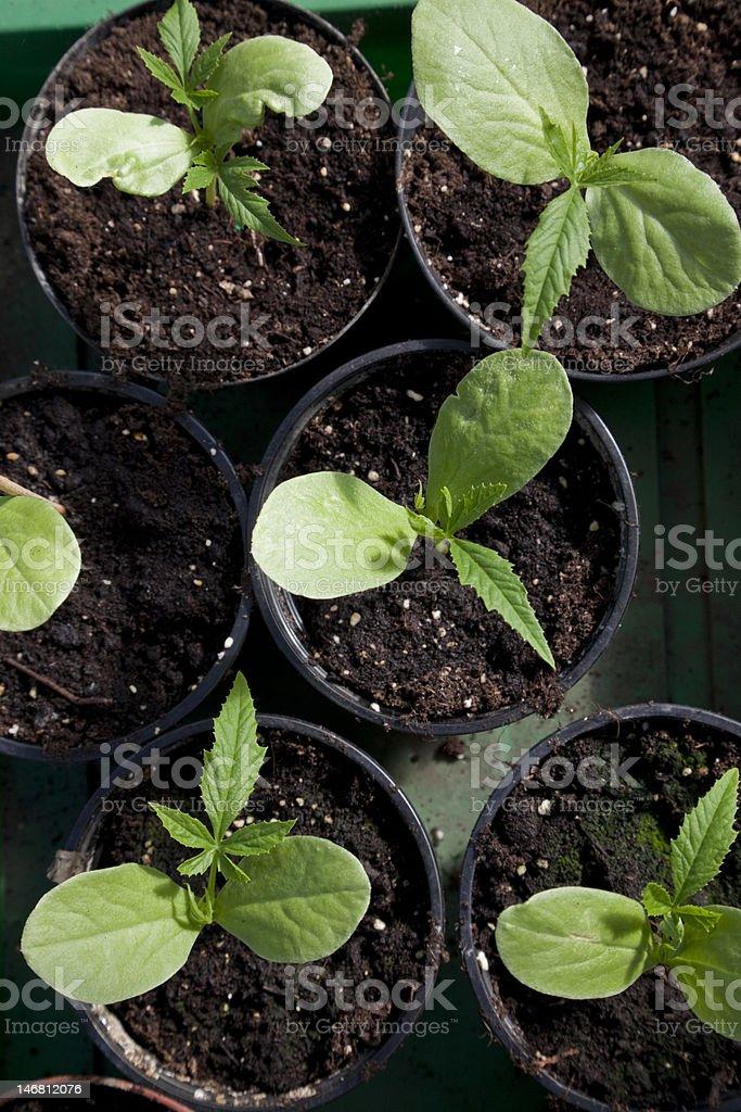 anpflanzen stock photo