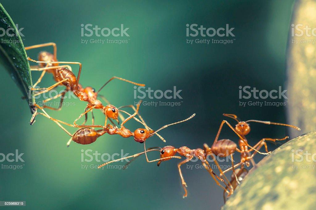 Ant bridge unity stock photo