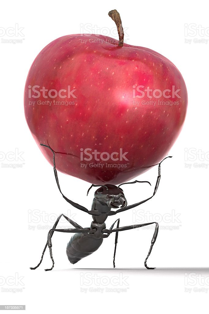 Ant Carrying an Apple royalty-free stock photo