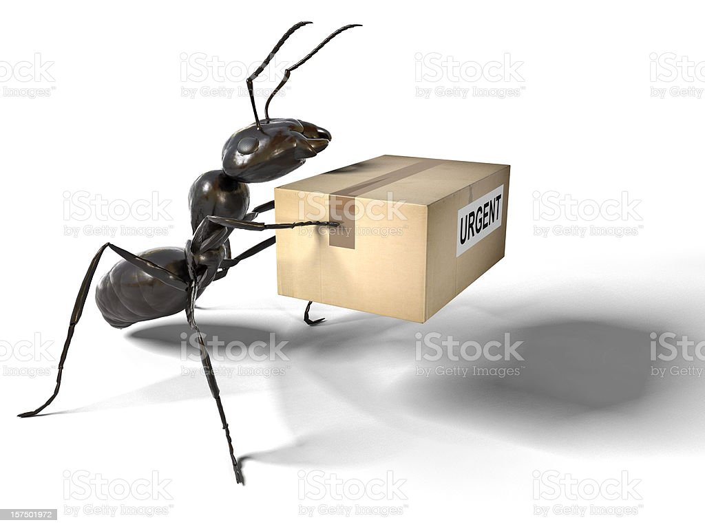 Ant Carrying an Urgent Package royalty-free stock photo