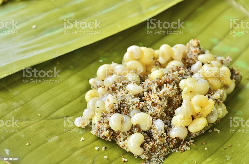 Ant eggs royalty-free stock photo