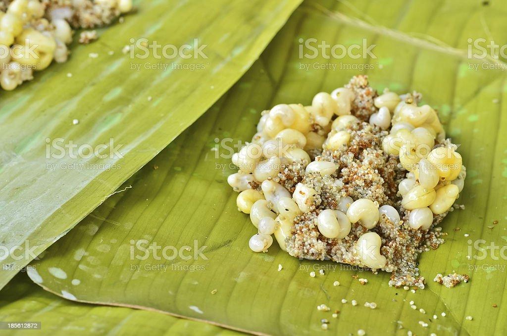 Ant eggs royalty-free stock photo
