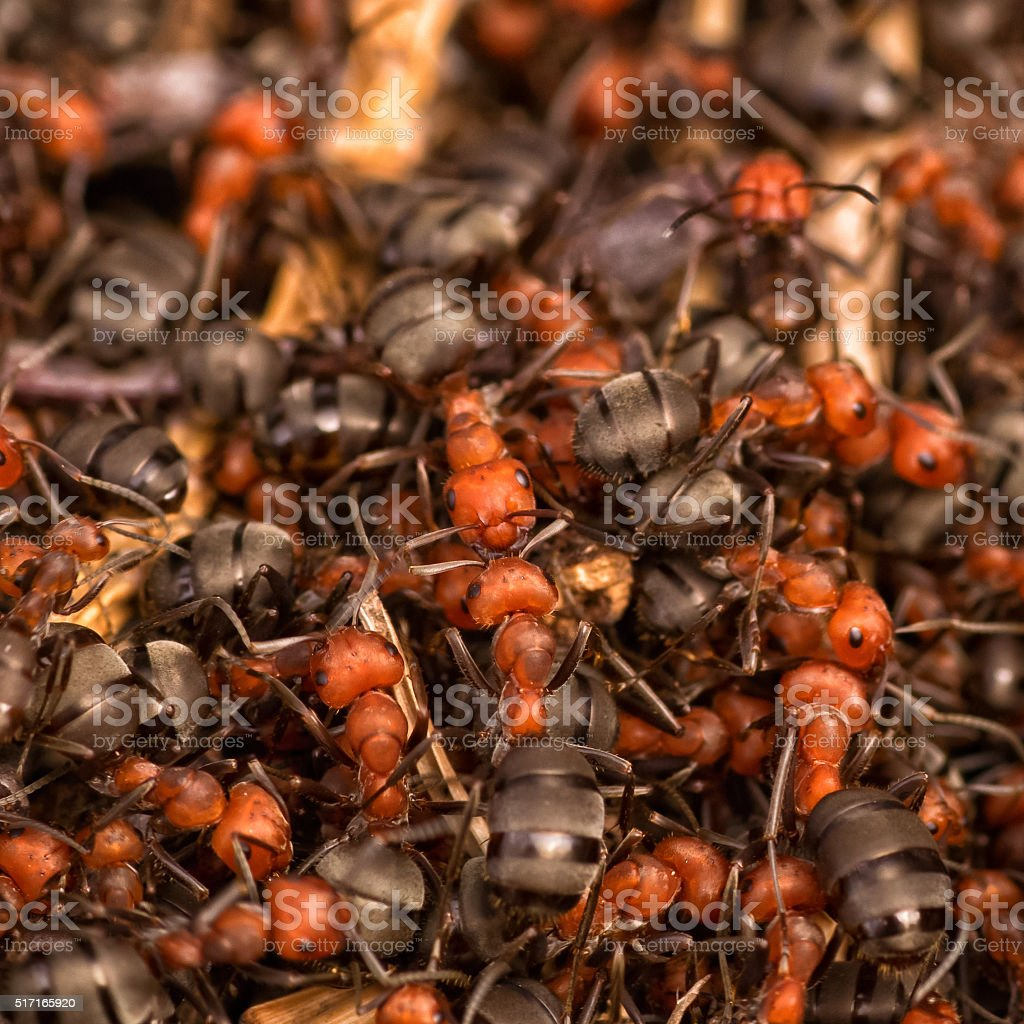Ant Farm stock photo