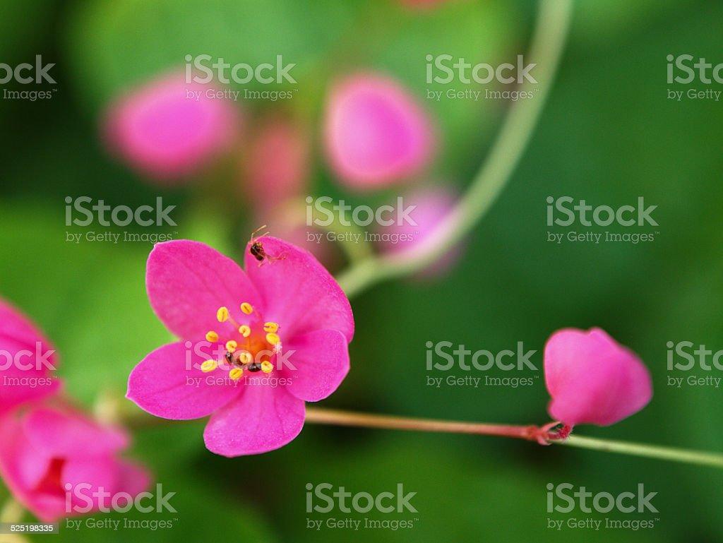 Ant & Flower stock photo