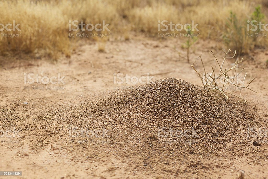 Ant Hill Mound Formation and Surroundings stock photo