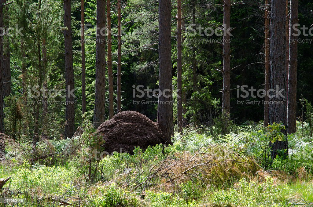 Ant hill stock photo