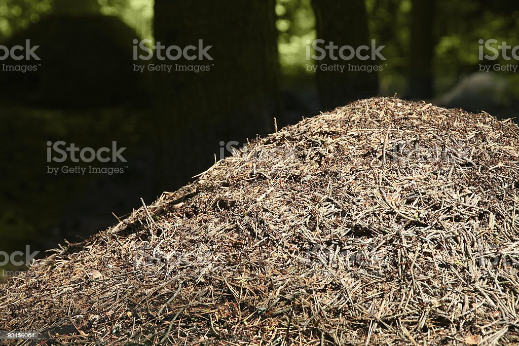 Ant hill royalty-free stock photo