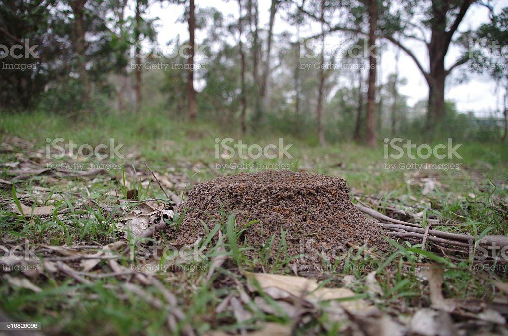 Ant Mound stock photo