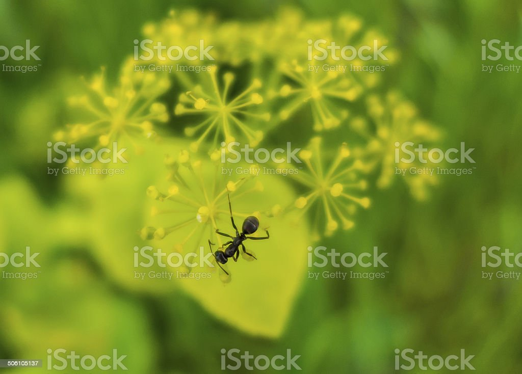 Ant foto royalty-free