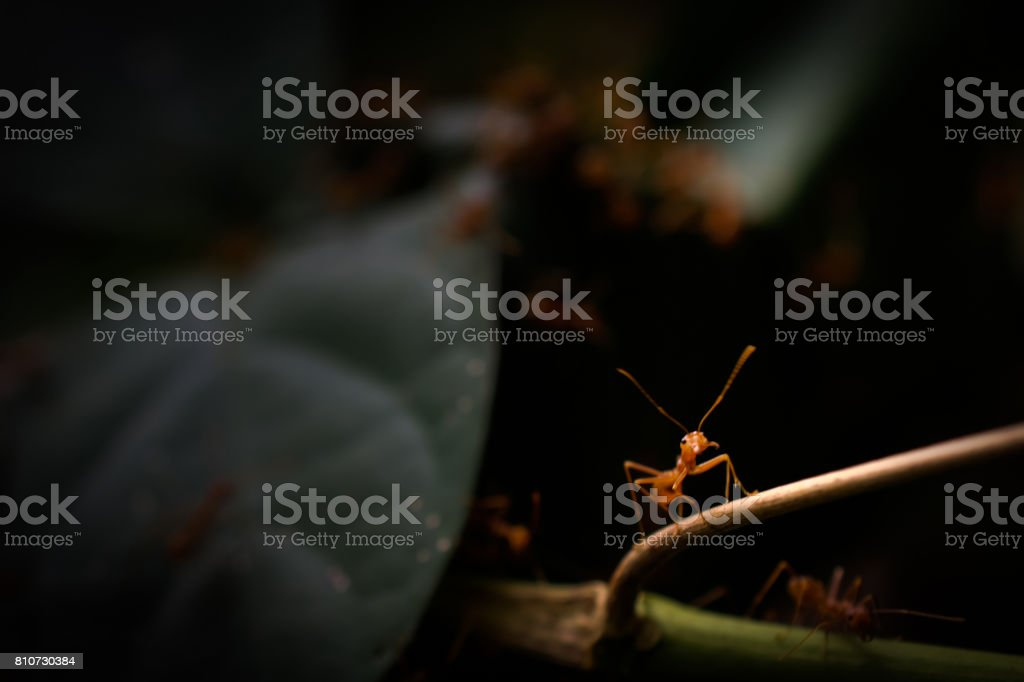 ant wildlife on nature background . stock photo