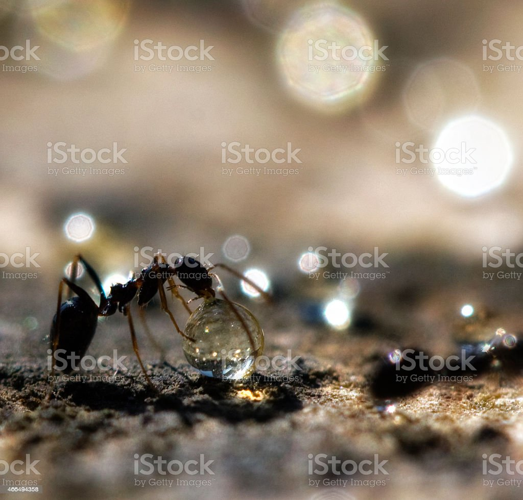 Ant with hovey stock photo