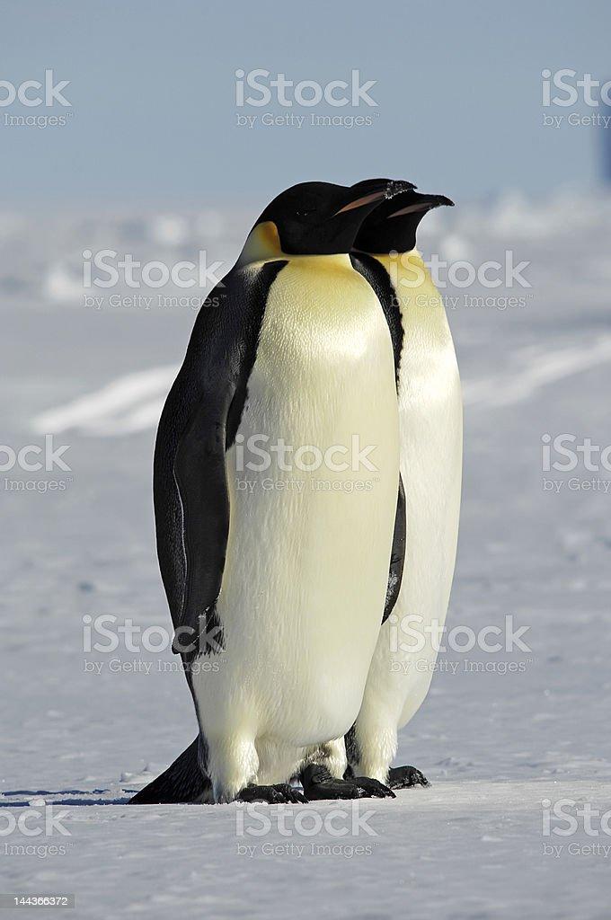 南極のカップル ロイヤリティフリーストックフォト
