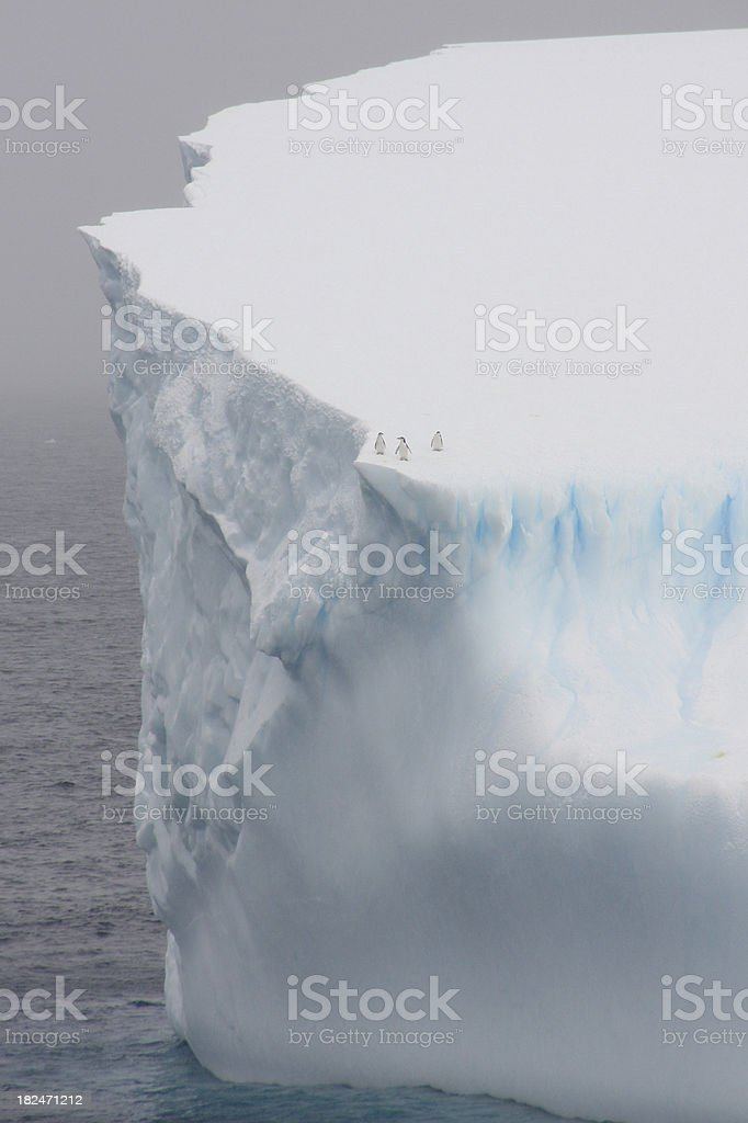 Antarctic Iceberg with three Chinstrap Penguins stock photo