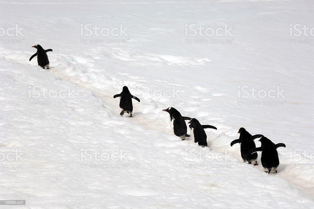 Antarctic Penguins stock photo