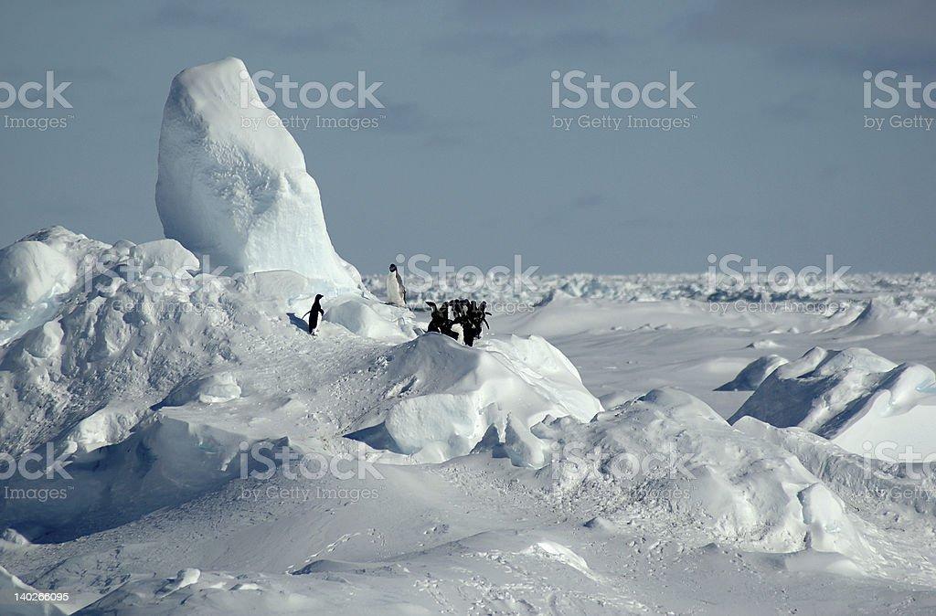 南極ペンギン ロイヤリティフリーストックフォト