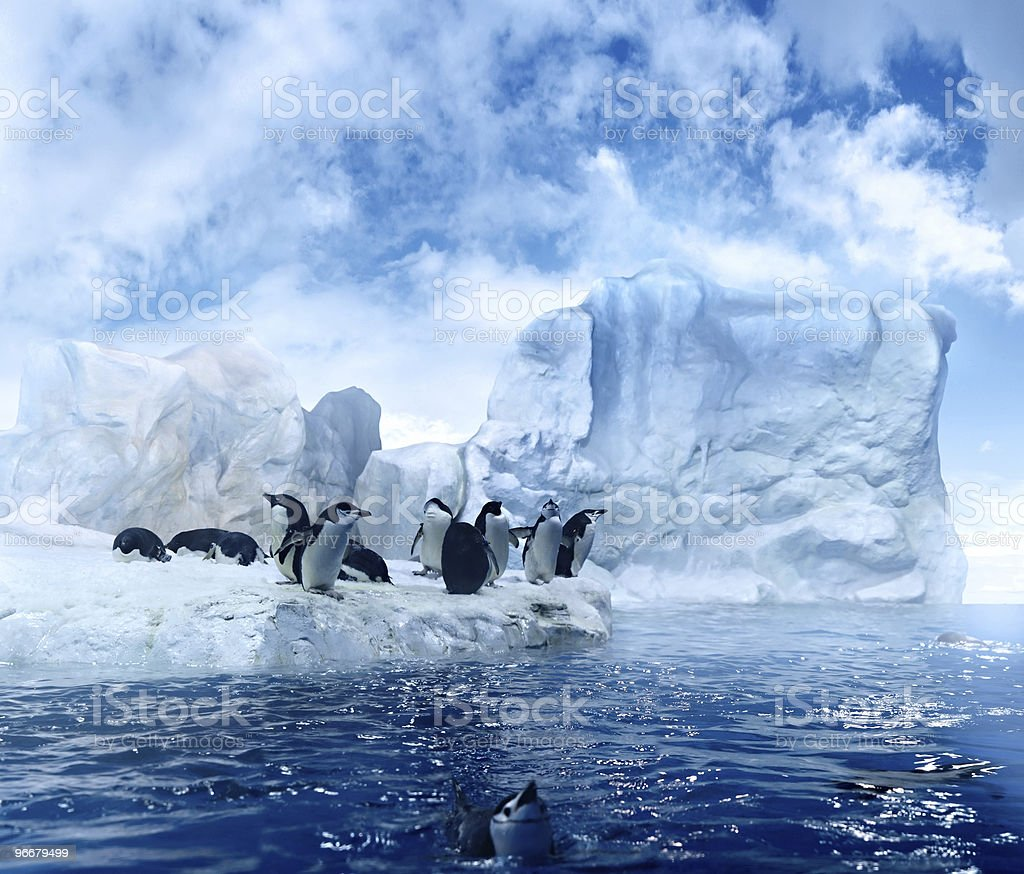 antarctic smalltalk royalty-free stock photo