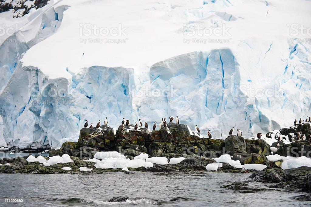 Antarctica birds stock photo