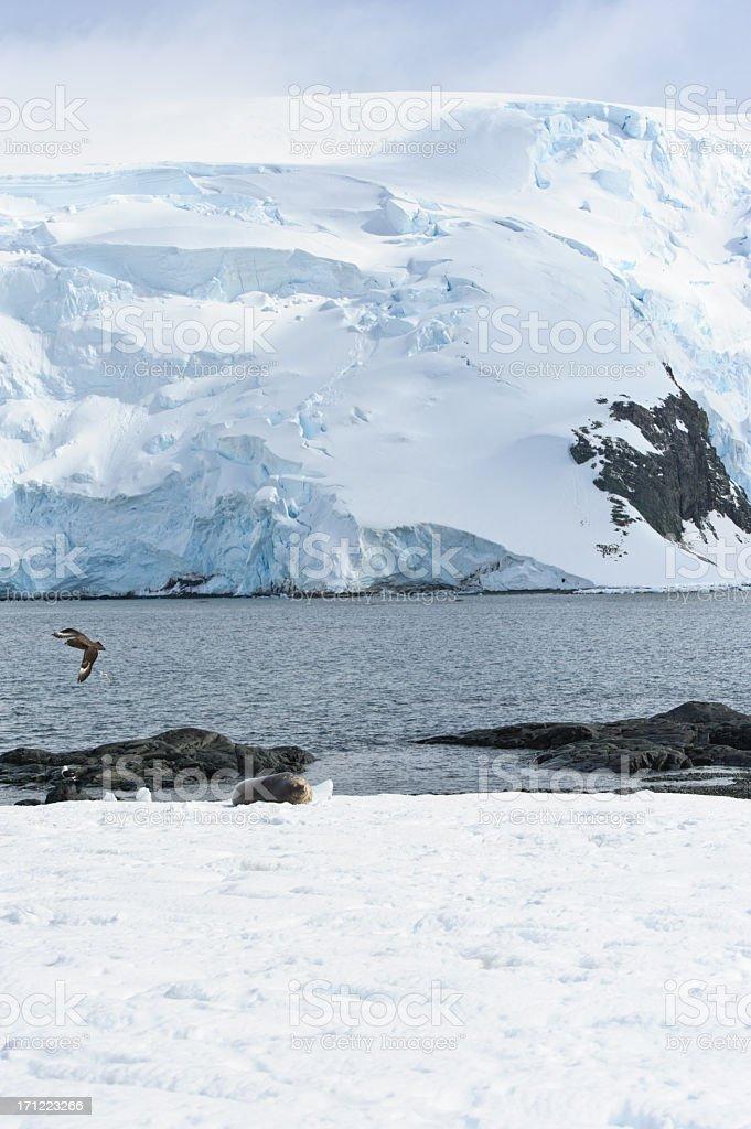 Antarctica wildlife stock photo