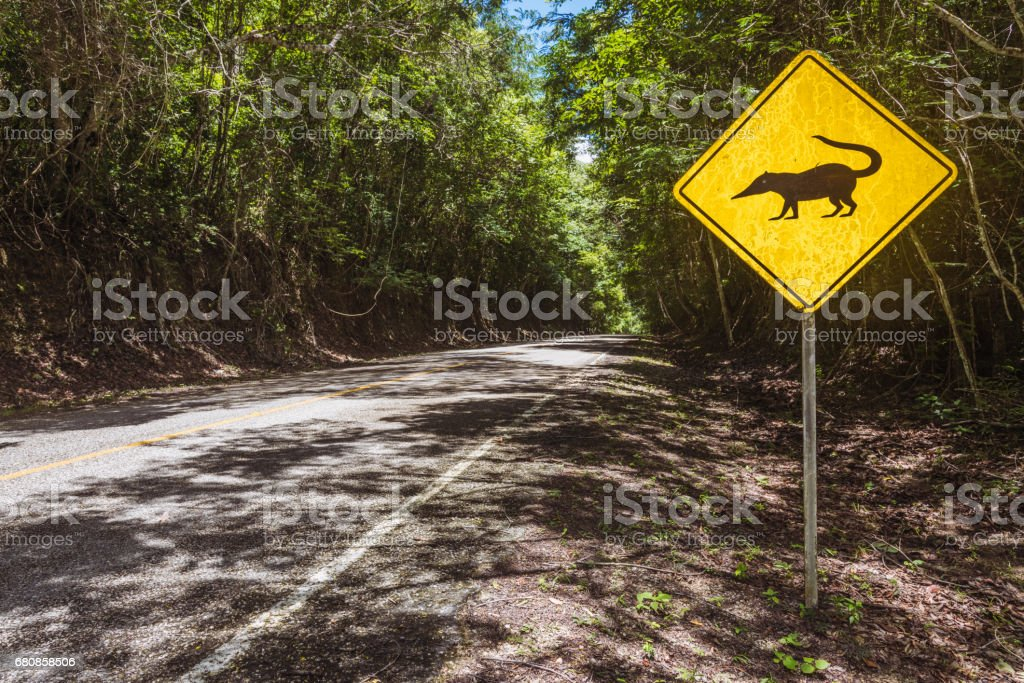 Anteater Warning Animal Crossing Sign Tikal Guatemala stock photo