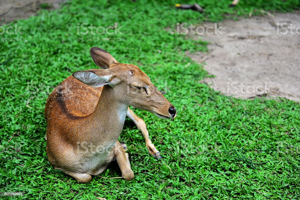 Antelope in the grasslands.At the zoo. stock photo