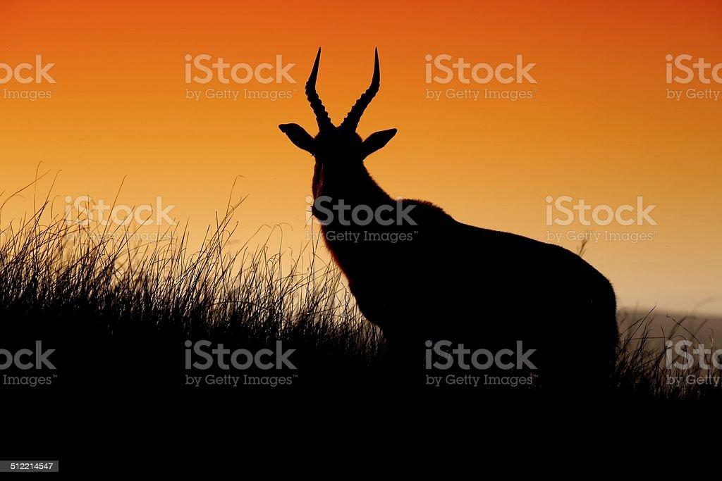 Antelope Silhouette stock photo