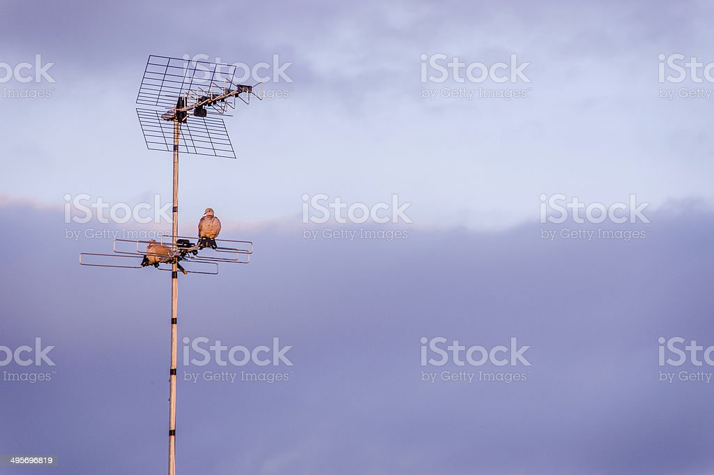 Antenna and pigeons stock photo