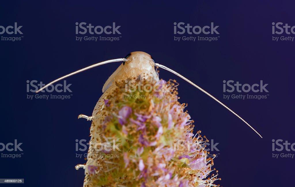 Antenna royalty-free stock photo