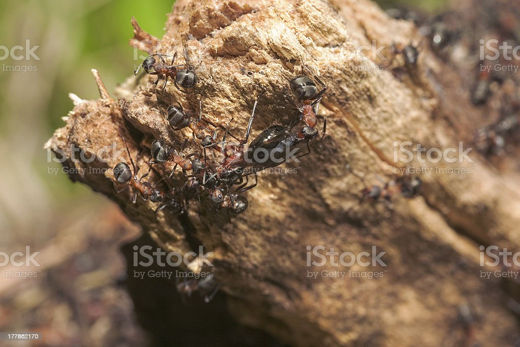 Anthill close up royalty-free stock photo