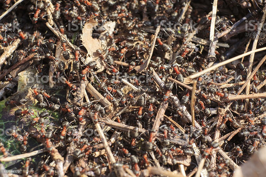 Anthill in the forrest stock photo