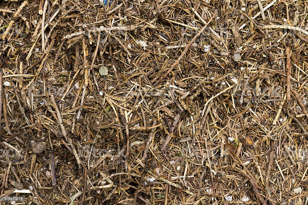 Anthill of a sunny day , close up royalty-free stock photo