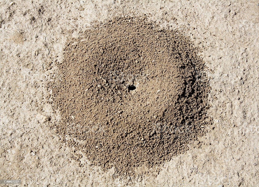 Anthill stock photo