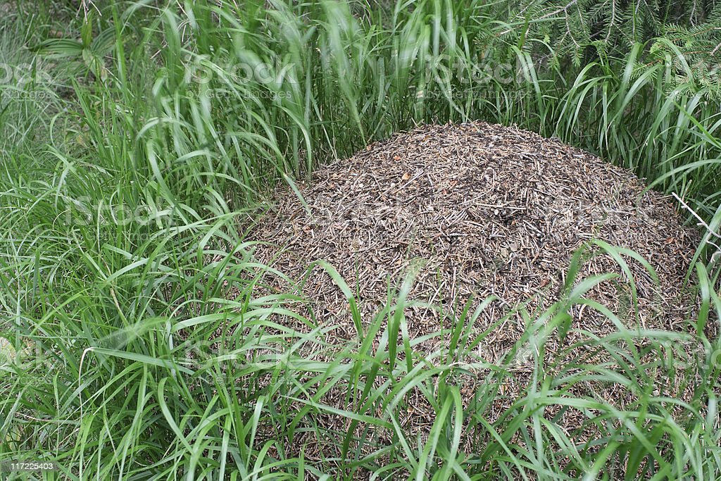 Anthill Surrounded By Grass royalty-free stock photo
