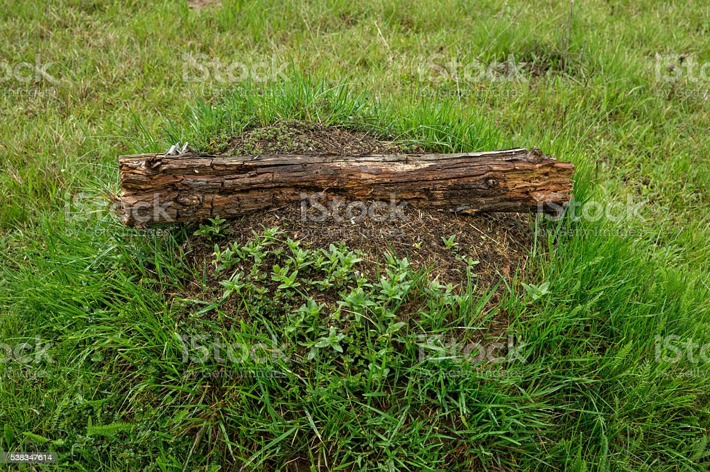 Anthill with a wooden shelf stock photo