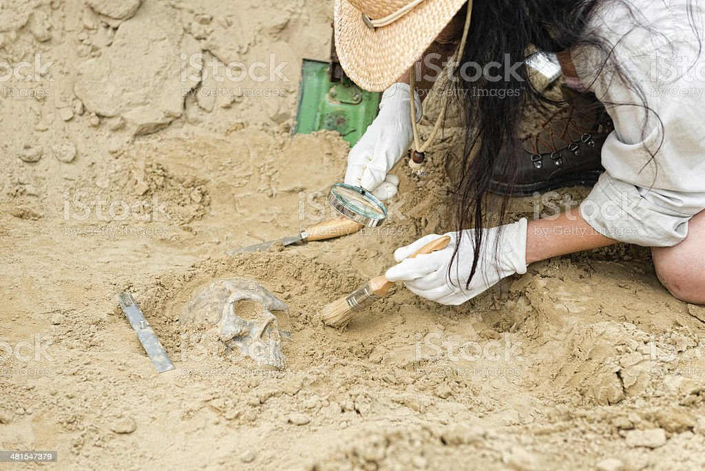 Anthropology - unearthing human skull stock photo