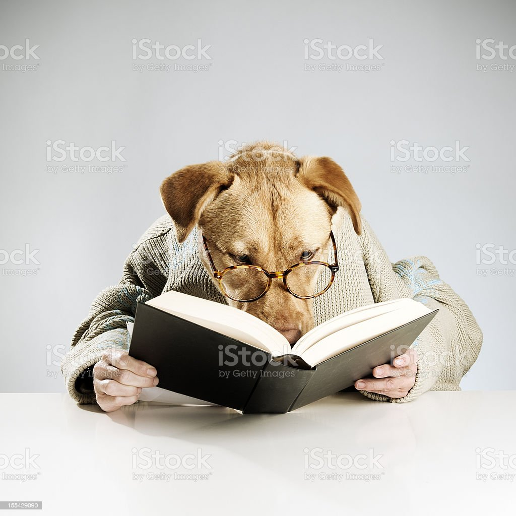 Anthropomorphic canine participating in human activities stock photo