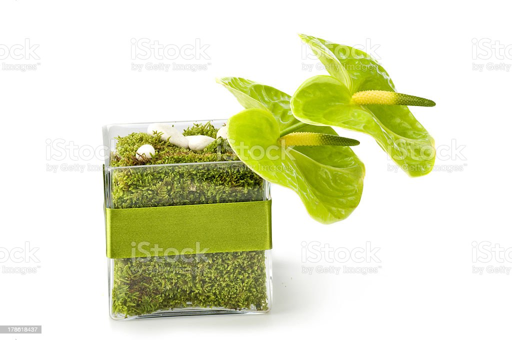 Anthurium boquet stock photo