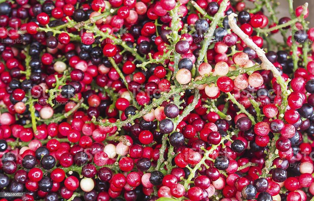 Antidesma of tropical  fruit stock photo