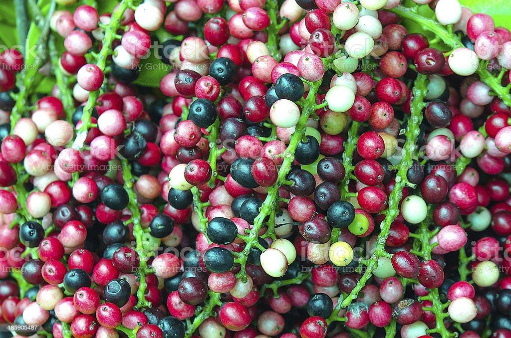 Antidesma velutinosum Blume stock photo