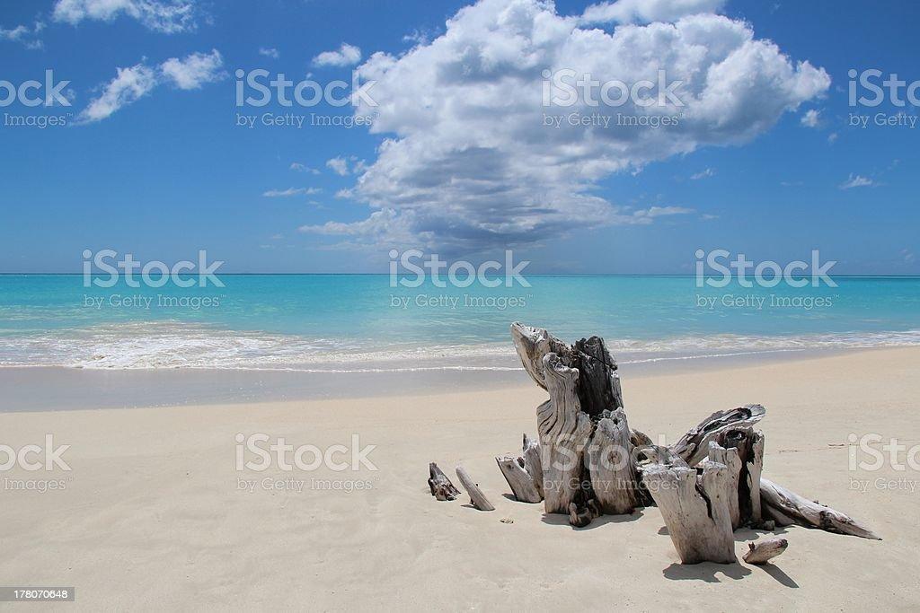 Antigua: beach and driftwood stock photo